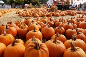 Bessemer Pumpkinfest